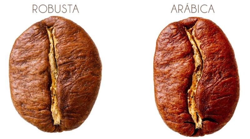 cafe en grano arabica y robusta