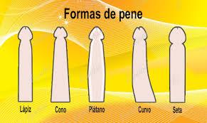 tipos de pene